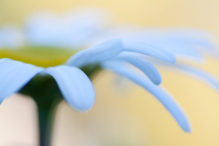 Blurry macro shot of a flower with yellow background