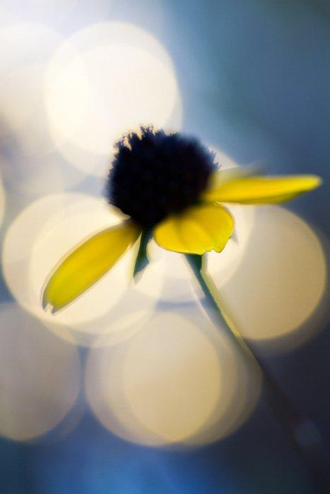macro photography examples - flower