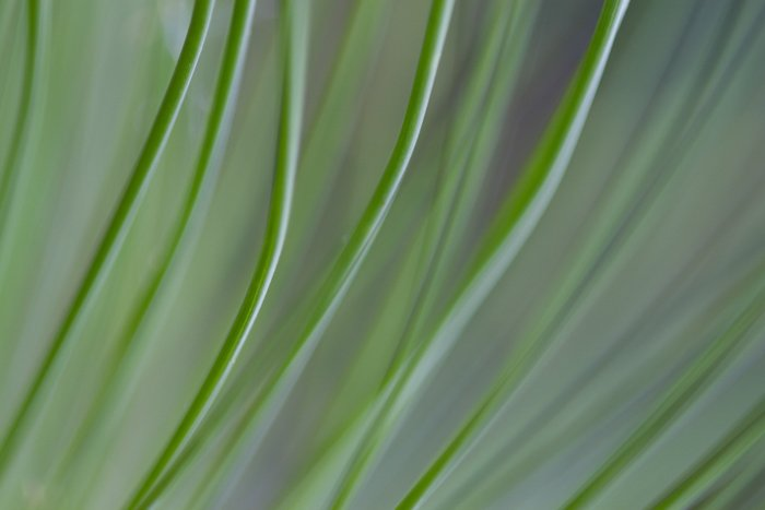 Macro shot of a grass - macro photography examples