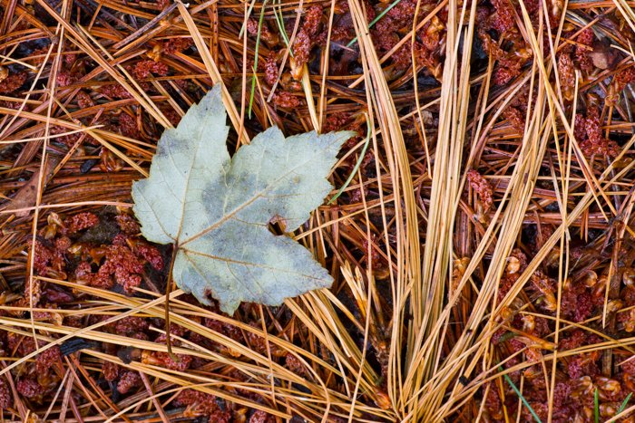 macro photography example of autumn leaves