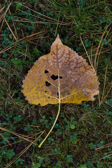 macro photography examples - autumn leaf