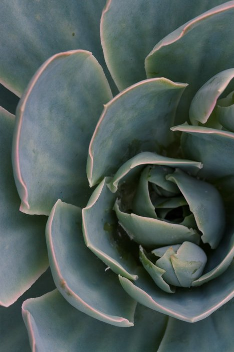 macro photography examples - plant