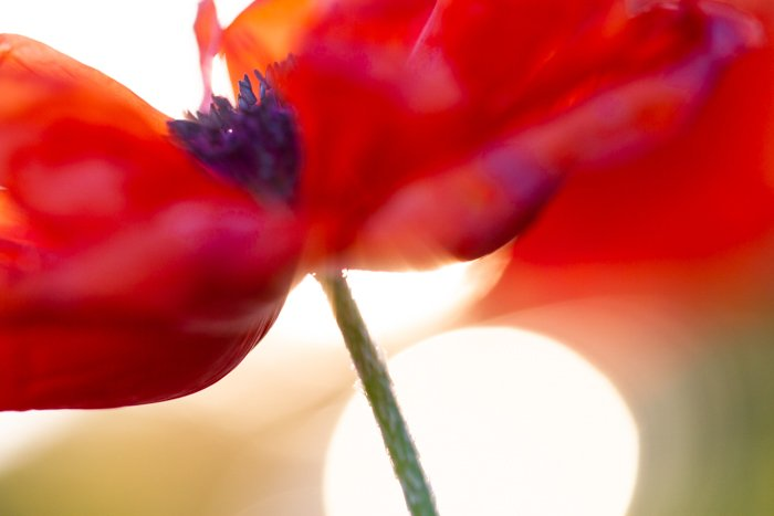 Macro shot of the centre of a red flower
