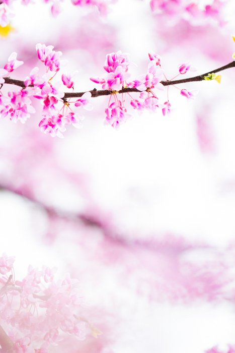 macro photography examples of blossoms on a tree