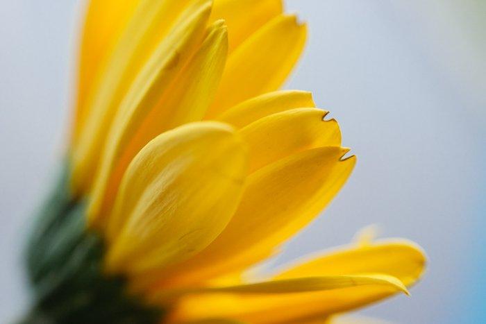a macro shot of a yellow flower - macro photography lighting tips
