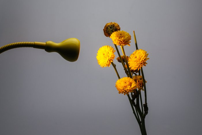 Macro photography lighting setup for taking a bunch of yellow flowers