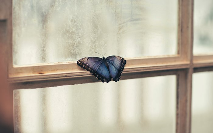 A blue butterfly resting on a door frame