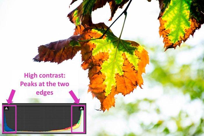 a leaf photo and lightroom histogram showing high contrast