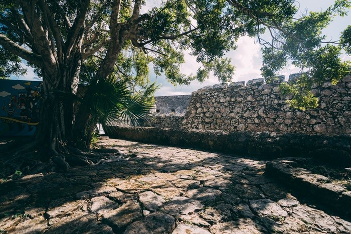 a photo of a tree casting shadows by a stone wall, utilizing dynamic range in photography