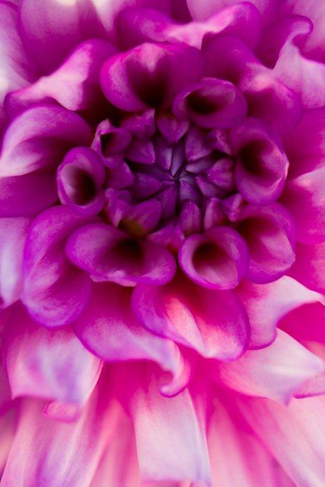 A soft focus fine art macro photos of a flower