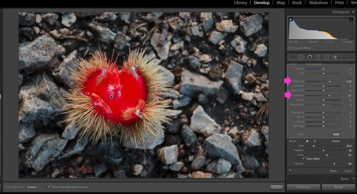 A screenshot showing how to use the Lightroom Adjustment Brush Tool