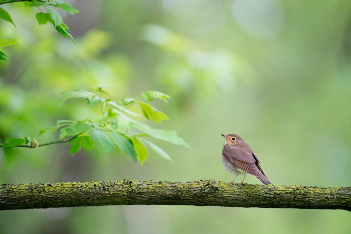 a robin on a branch - symbolism photography