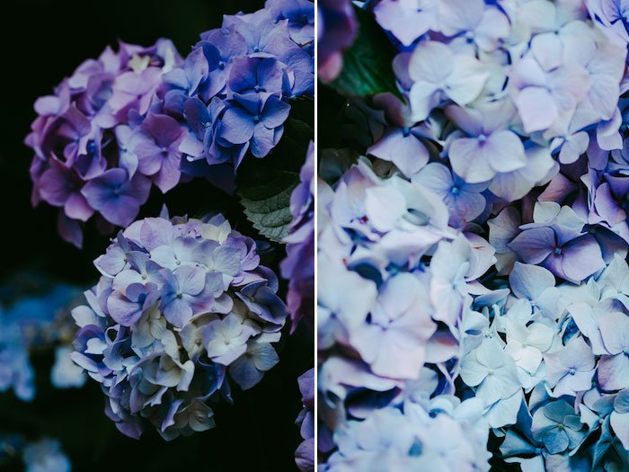 diptych flower photos edited with Lightroom - Adobe Lightroom mistakes