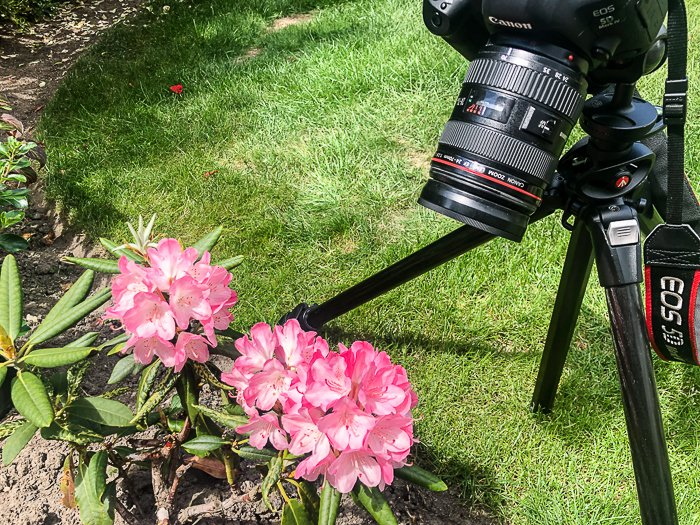 a Canon DSLR set up on a tripod taking a macro shot of pink flowers