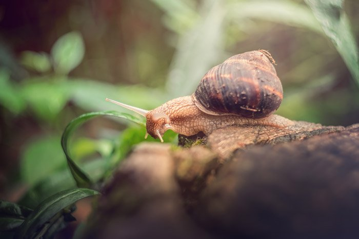 a snail on a log - symbolism in photography