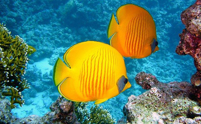 a beautiful image of yellow fish underwater