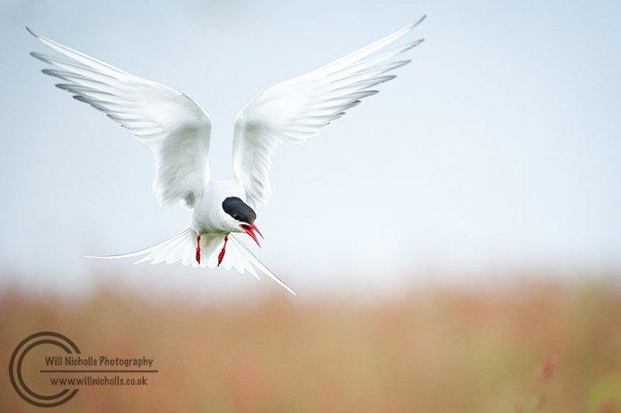 a watermarked image of a wild bird in flight