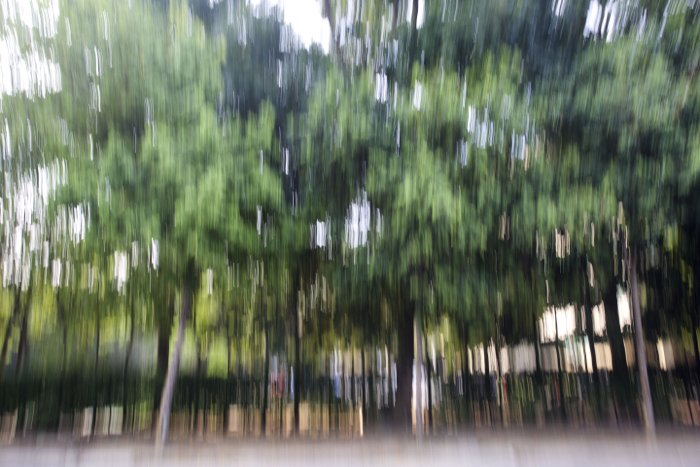 a blurry photo of a forest