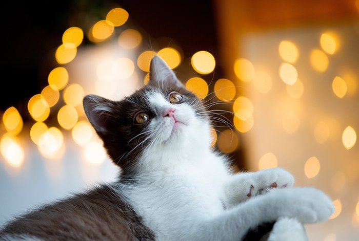 Cat with a bokeh frame.
