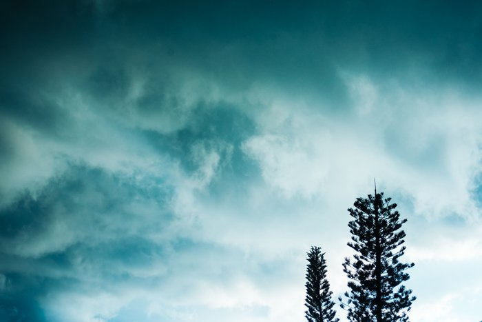 Photo of trees with the sky in a greenish colour in the background