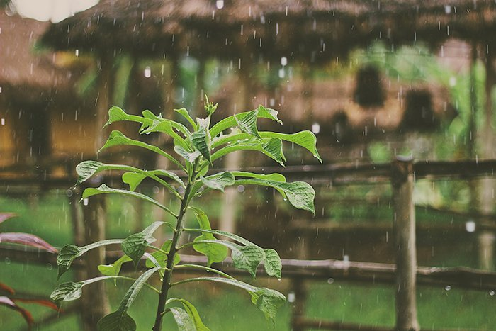 Motion blur photo of falling rain