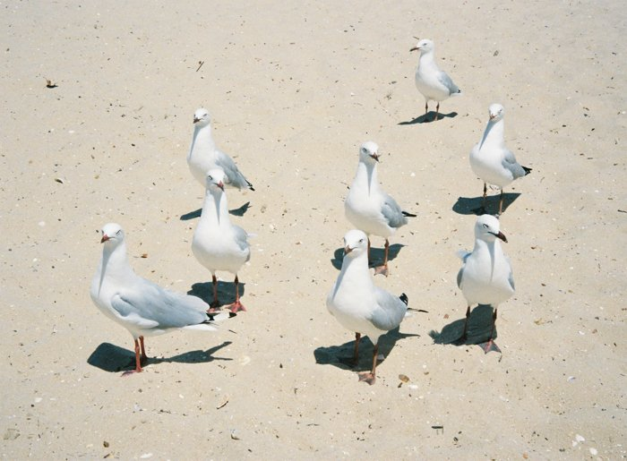 Image of eight seagulls standing on a sandy beach