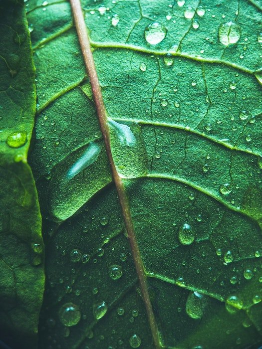 Macro photo of a green leaf with raindrops on it