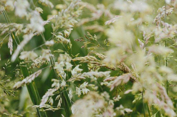 Macro photo of wheat in landscape format