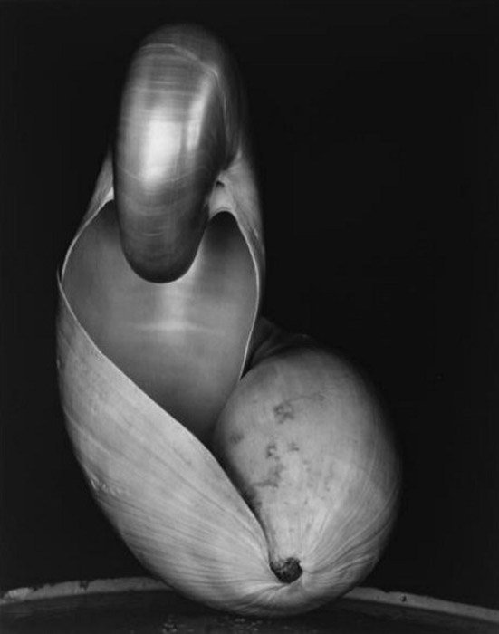 Portrait photo of a shell in black and white