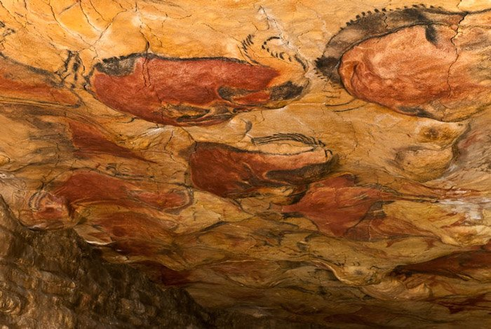 Photo of a cave painting in the Altamira caves depicting bisons
