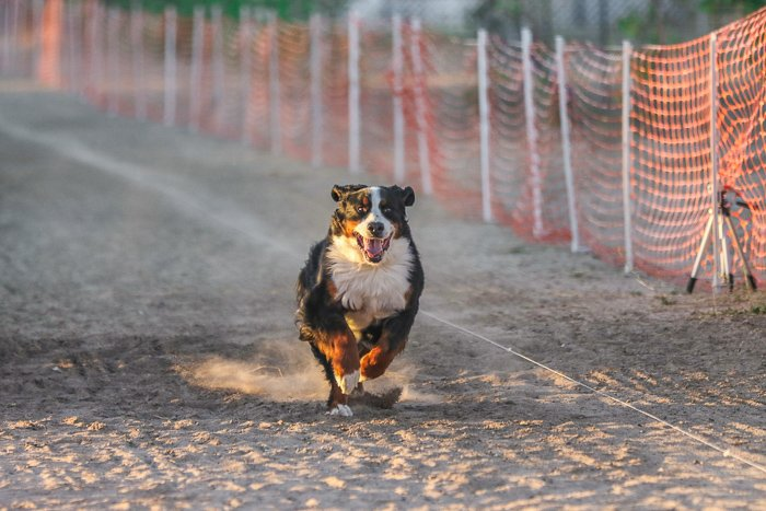 Photo of a dog running on a dirt road