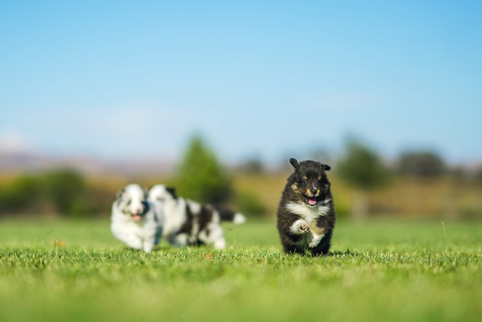 Photo of small puppies in the middle of a field
