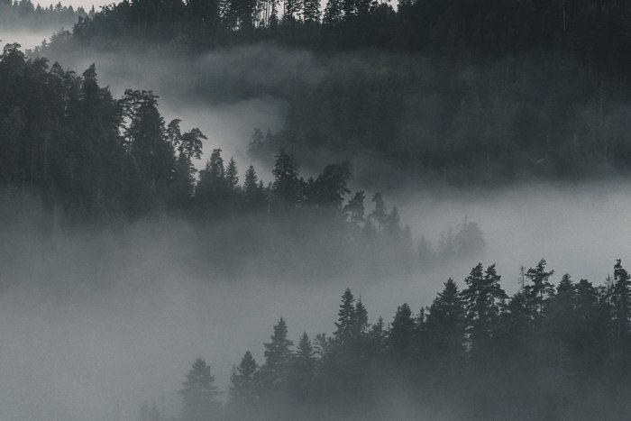 Misty forested mountains
