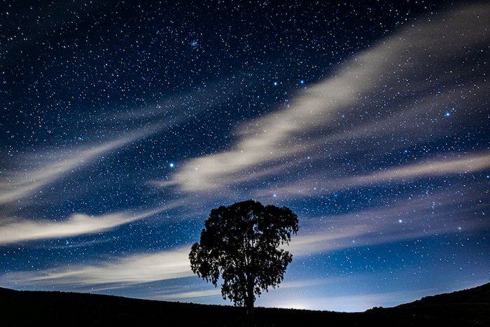 The silhouette of a tree under a starry sky using long exposure photography effects