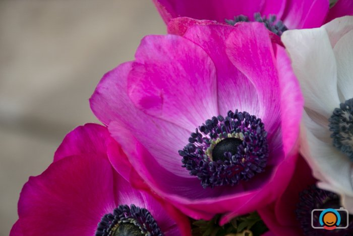 close up of a bunch of pink flowers