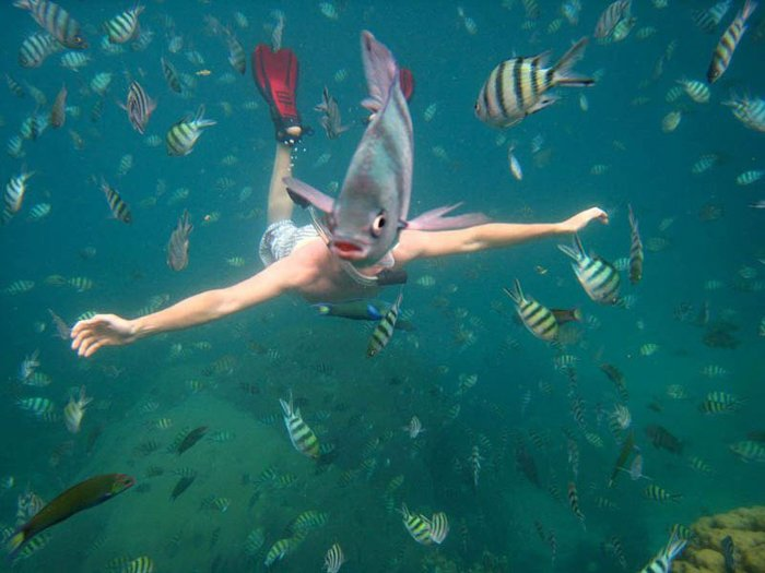 Photo of a diver with a fish swimming in front of his head