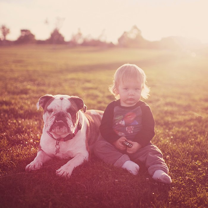 A small child sitting in a field with a pet bulldog