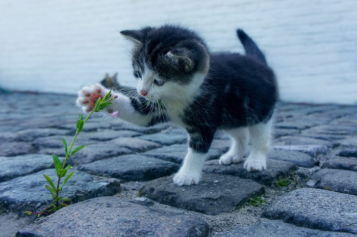 a cute kitten playing with a flower
