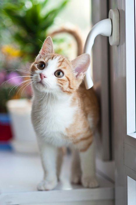 a cute kitten by a windowsill indoors