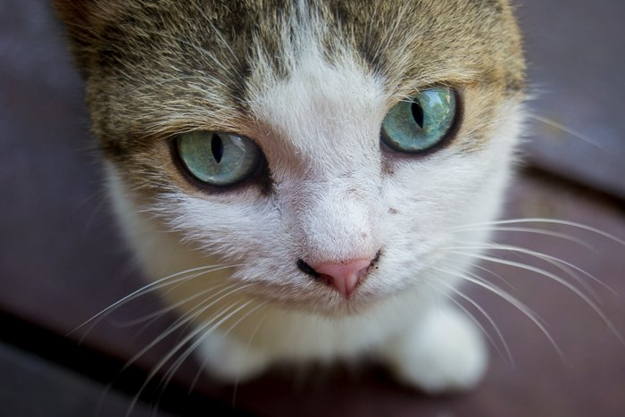 close up of a cute brown and white cat with green eyes