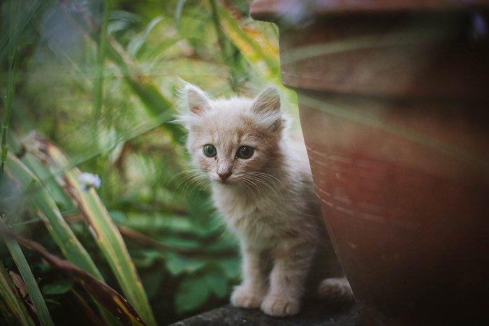 a cute kitten by a large flowerpot outdoors