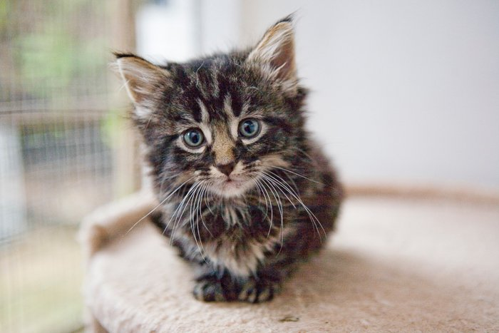a cute kitten looking at the camera