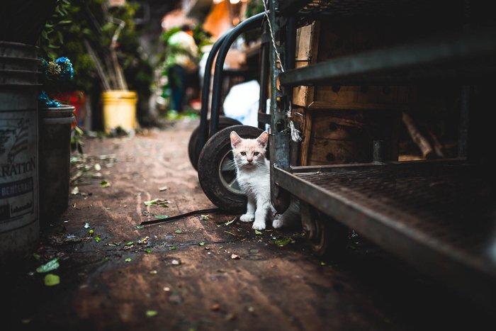 a cute white kitten hiding among garden objects