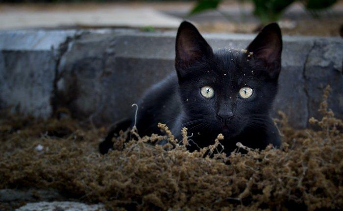 a black cat sitting in moss