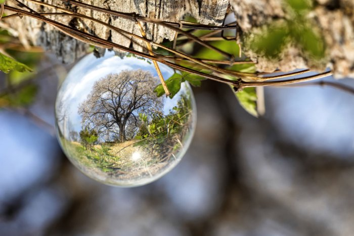 A waterdrop reflecting a tree