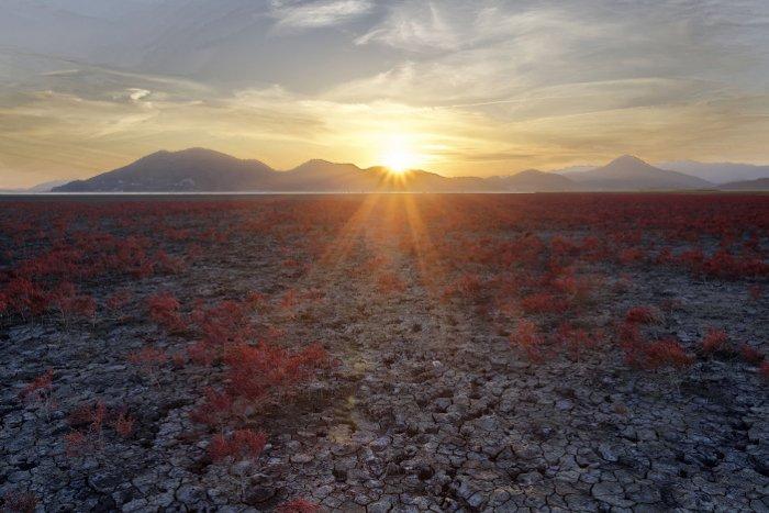 Photo of salt marsh plants at dawn