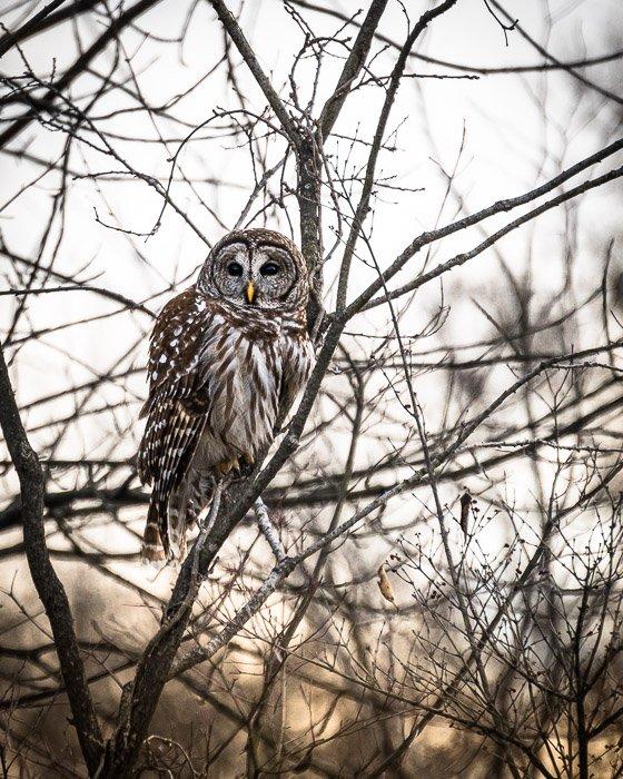 Owl sitting in a tree
