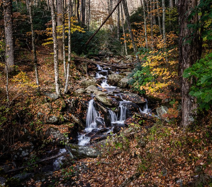 A river flowing through a forest