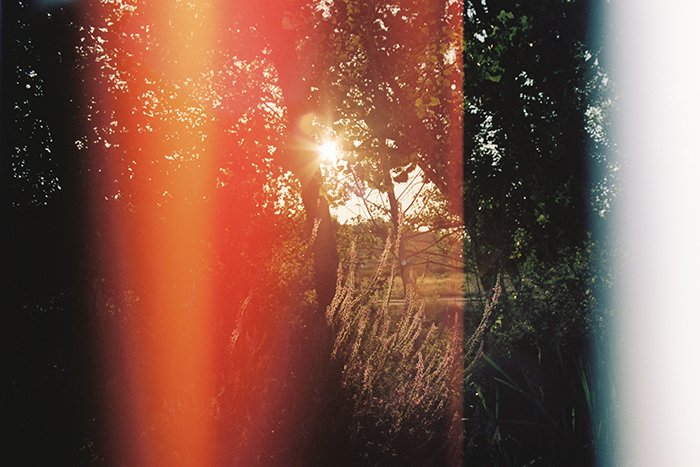 Photo of a forest with light leaks