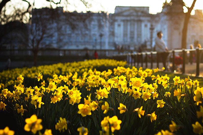 Photo of a park full of yellow flowers